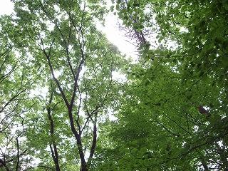 s-森林公園の緑