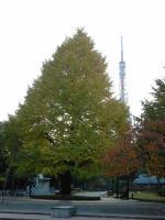 秋の芝公園②