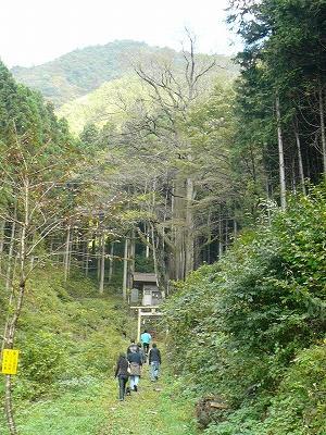 巨木への道①