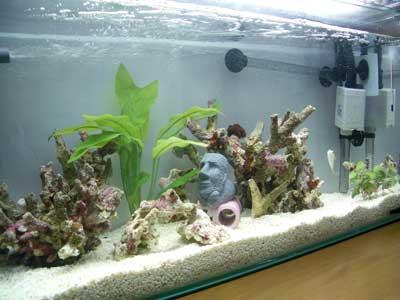 60海水水槽1