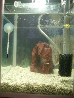 どんちゃん水槽2