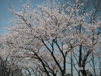 花見&公園1