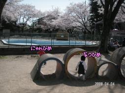 花見&公園2