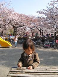 2008 南河原の桜の下で