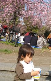 2008 南河原の桜の下でかき氷