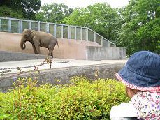 2008.5 多摩動物園・ゾウ