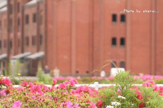 花と赤レンガ倉庫