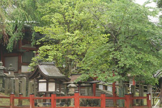 奈良公園 氷室神社