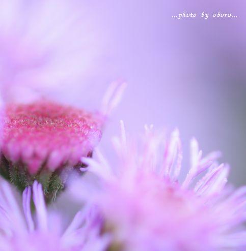 花をマクロで3