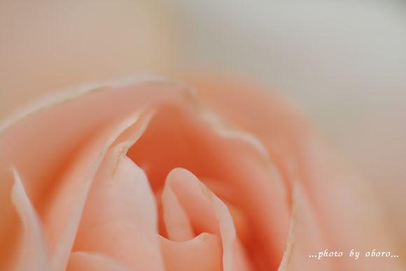 薔薇マクロ