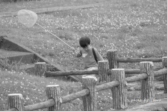 夏の花たち 江津湖にて2
