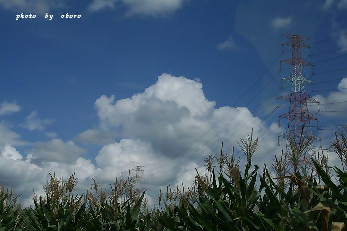 空とトウモロコシ畑と