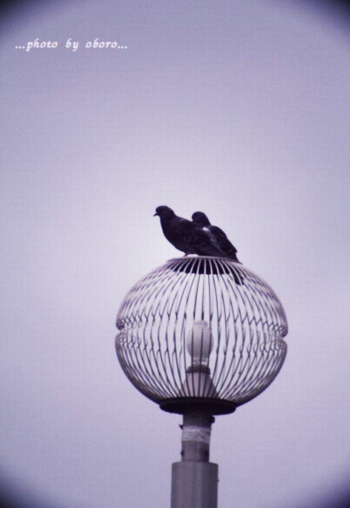 hato.png