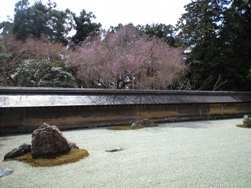 竜安寺石庭