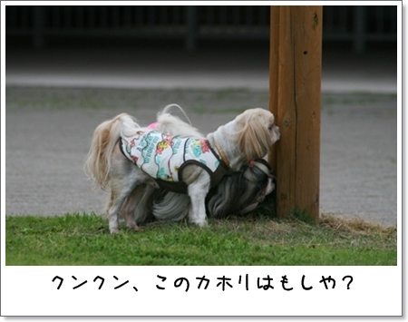 2008_0628_180304AB.jpg