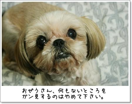 2008_0707_190655AB.jpg