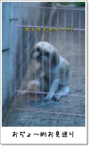 2008_0715_190155AA.jpg
