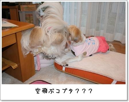 2008_0719_183312AA.jpg