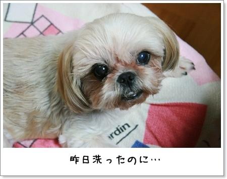 2008_0724_190356AA.jpg