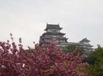 桜のバックに姫路城
