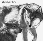 20080317_wolf_b.jpg