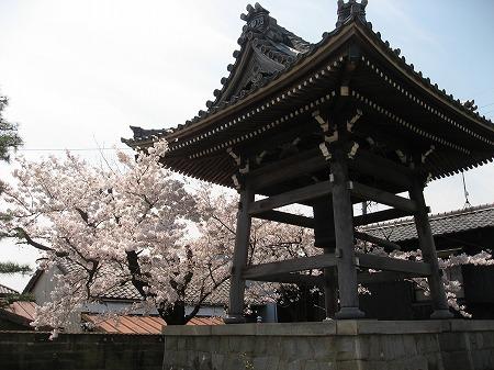 桜満開の鐘付き堂