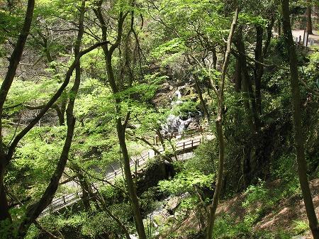 養老の滝の森
