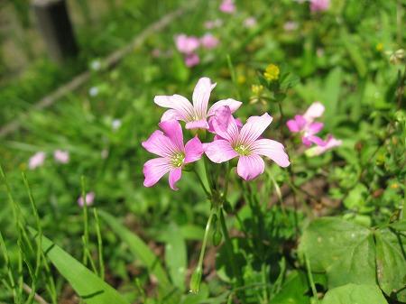 朝日新聞-お遍路取材-旧遍路道沿いの花