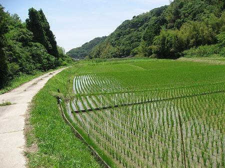 朝日新聞-お遍路取材-里山