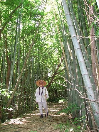 朝日新聞-お遍路取材-竹林