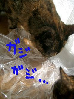 猫さいきんあったかく6