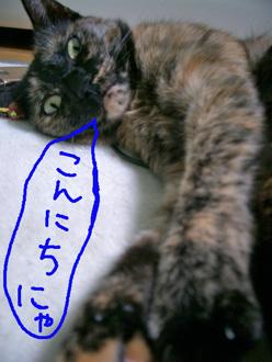猫さいきんあったっくなってきた10