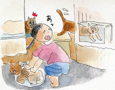 猫シャンプー1