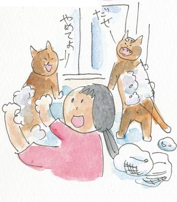 猫シャンプー4