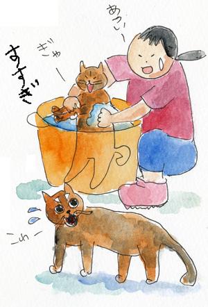 猫シャンプ-5