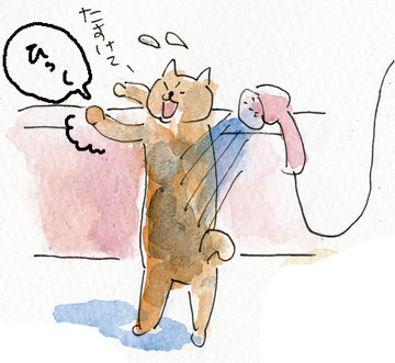 猫シャンプー6