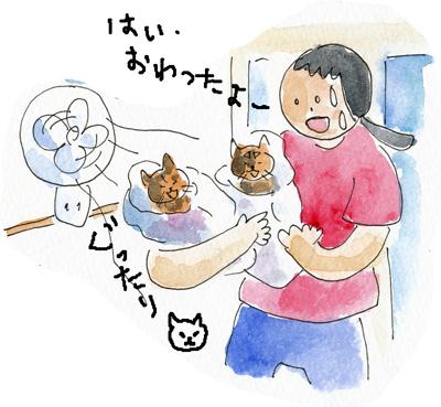 猫シャンプー7