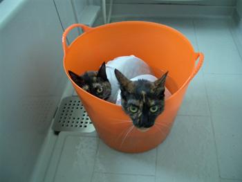 猫シャンプー写真
