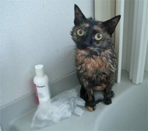 猫シャンプー写真3