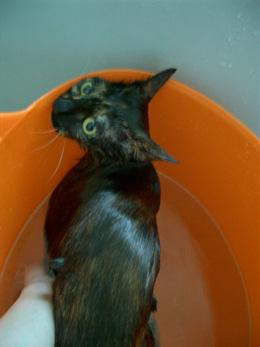 猫シャンプー写真4