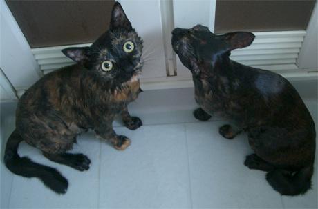 猫シャンプー写真5