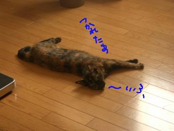 猫シャンプー写真6