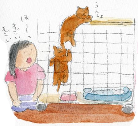 猫はしご2