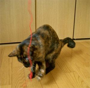 猫の好物5