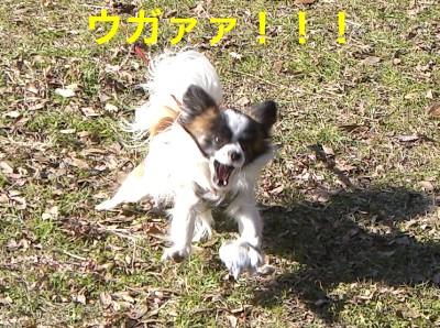 6うがぁ!