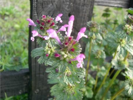 3ピンクの花