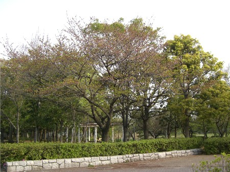 9新緑の公園