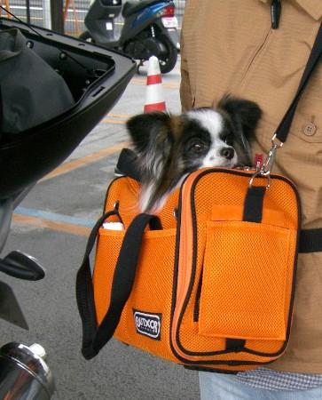1バイク犬