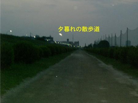 8河川敷沿いの道