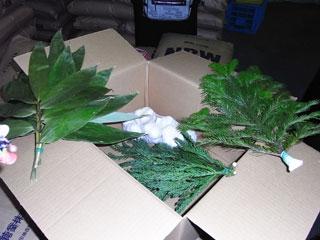 保管される植物